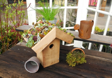 Hottest gardening trends and container tips