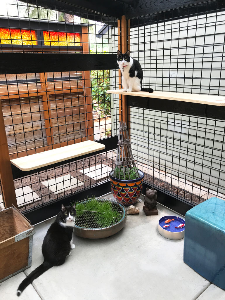 Catio Astro DeeDee